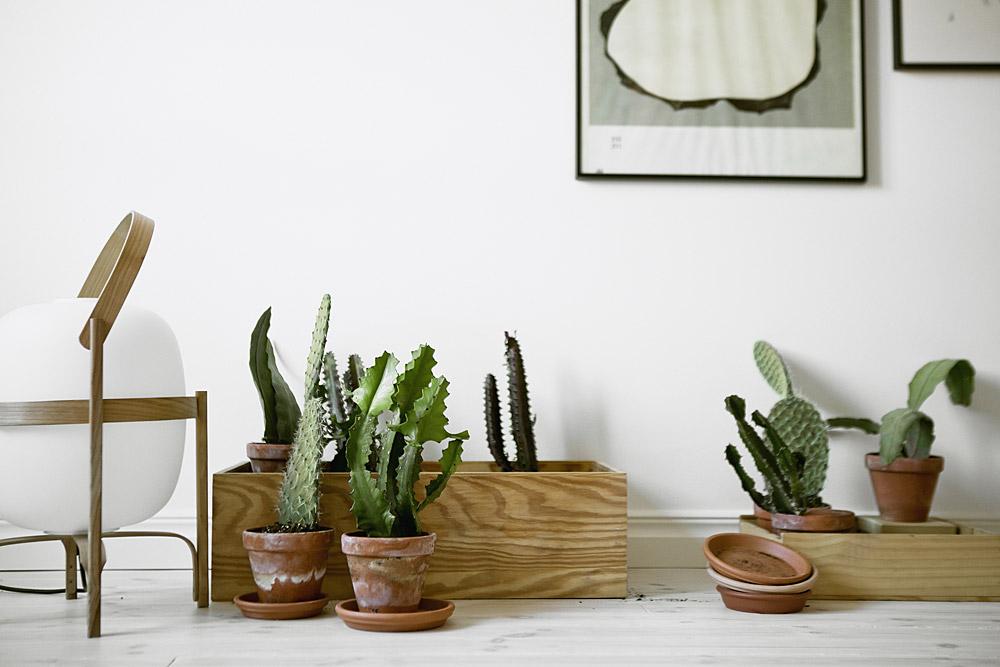 Scandinavisch Interieur Planten Cactus