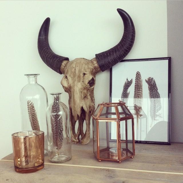 buffel-schedel-nep